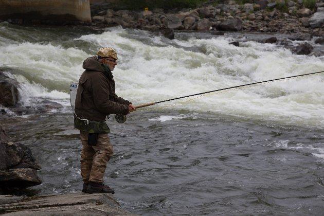 SFLUESONEN: Veiko Huotari har vunnet laksefiskekonkurransen i Neiden flere ganger. Han kommer helt fra Helsinki for å fiske laks. Denne gangen ble han frarådet av sin lege å dra, fordi han for ikke lenge siden fikk sydd på en arm etter en ulykke og såret ennå ikke hadde grodd. Men til Neiden dro han.