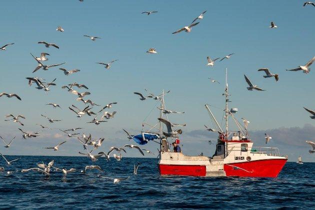 Naturvernforbundet i Finnmark vil ha bærekraftig fjordfiske i Frakkfjorden.