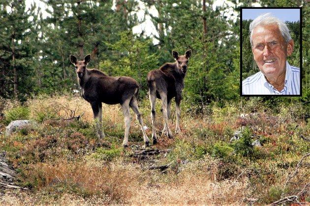 Hvem eller hva skal ulven leve av når elgen er utryddet? Det spørsmålet stiller Hroar Braathen seg.