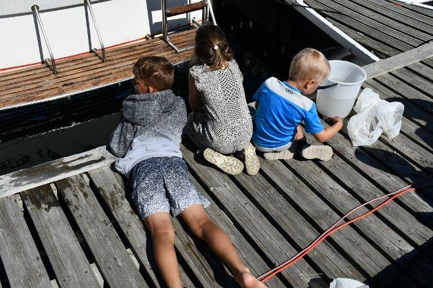 KRABBEFISKE: Noen barn som fisker etter krabber fra brygga ved Gunnarsholmen.