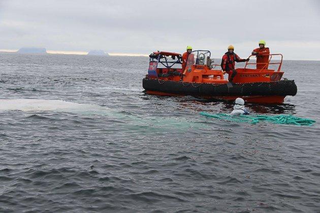 Lettbåt og mannskaper søkte i to timer langs kysten på øya.