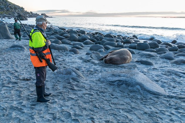 Det vakte oppsikt da en kvalross dukka opp på Uttakleiv på Vestvågøy onsdag. Flere lurte på om den var døende. Veterinær ble tilkalt, men kunne ikke komme onsdag.
