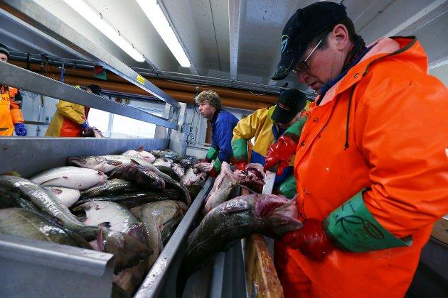 Alle som skal høste av de rike nære ressursene i torskefiskeriene fra Lofoten og nordover bør over på fangst med utvelgende redskaper. Fisken som fanges bør tas på land nært der det høstes og her håndteres som det flotte produktet slik dagfersk og voksen fisk er. Dette vil kreve gjenoppbygging av nord-norsk fiskeindustri, skriver Ragnar Elias Nilsen.