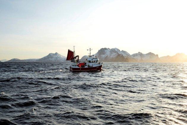 Jeg ber både fiskere og politikere om å ta til vett og stoppe raseringa av den absolutt viktigste resursen vi har. Vi har bruk for både store og små båter i framtida, så det er på høy tid å ta frem føre var-prinsippet, skriver sjarkfisker Erling Hansen.