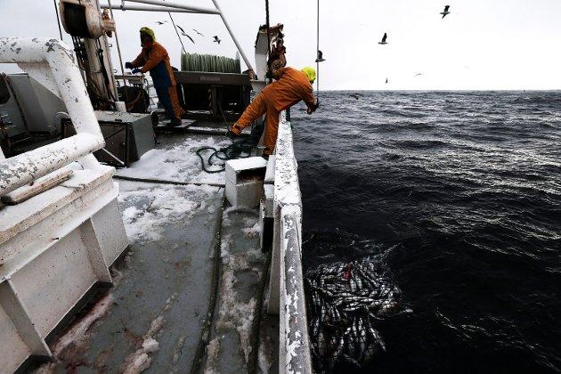Vet stortingsrepresentant Geir Adelsten Iversen i det hele tatt hvordan et snurrevadfartøy utøver sitt fiske og hvordan fangsten behandles ombord? undrer artikkelforfatteren.