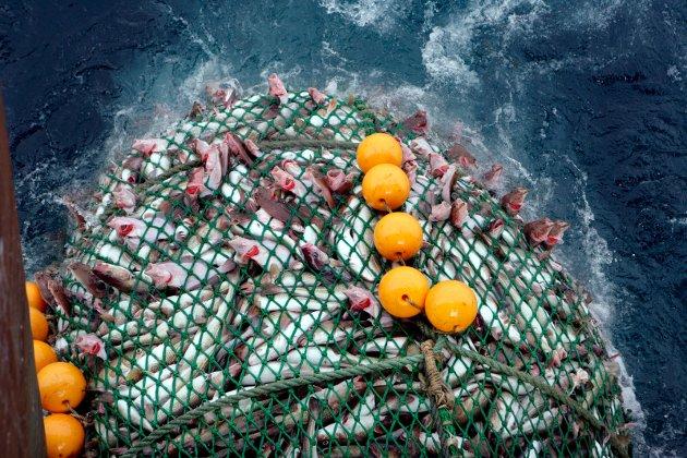 Det er helt i tråd med Stortingets klare vedtak etter Riksrevisjonens drepende avviksanalyse, at kvoter til kystfiskeflåten som gir arbeid og ringvirkninger langs hele kysten bør hentes fra de leveringspliktige trålerne som ikke oppfyller sin samfunnspålagte oppgave, skriver Torbjørn Trondsen og Arne Luther.
