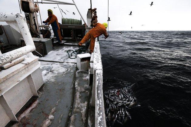 Politikerne har dessverre skapt en usikkerhet som har resultert i at bådefiskebåtrederi og foredlingsanlegg har satt fremtidige investeringer på vent, skriver lederne i Fiskebåt.