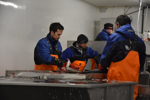 FISKEINDUSTRI: Sløyelinja ved fiskebruk på Tangstad i Lofoten. Tusenvis av utenlandske arbeidere kommer til Nord-Norge for å jobbe under vinterfisket.