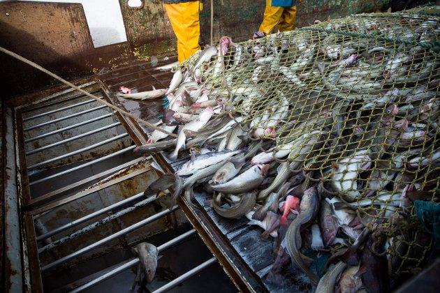 Hovedårsaken til at øvrig norsk fiskeindustri ikke er mer lønnsom enn den er, det er først og fremst for lite råstoff. Altfor mye går direkte fra trålerne og ut av landet uten bearbeiding, skriver Steinar Eliassen.