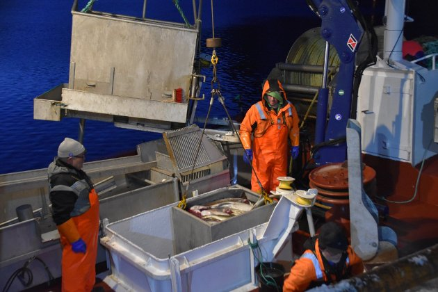 Årets Lofotfiske er allerede i gang. Foto: Kai Nikolaisen/Lofotposten.