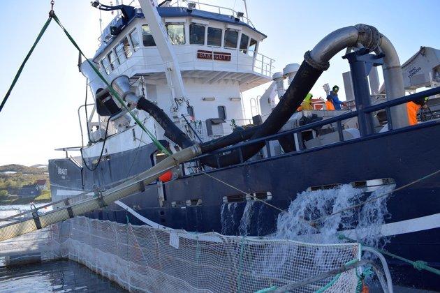 """""""Båragutt"""" pumper levende torsk til mær i Båtsfjord."""
