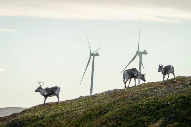 Bit for bit har viktige reindriftsområder blitt bygd ned, og i dag er det vindkraftindustriens fremmarsj som er den største trusselen, skriver Rødts stortingskandidater i nord.