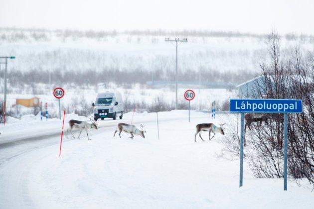 Over hele Finnmark har vi enorme naturressurser. Naturressurser som Finnmarkingene har vært gode på å drifte og forvalte, skriver innsenderen. Foto: Heiko Junge / NTB