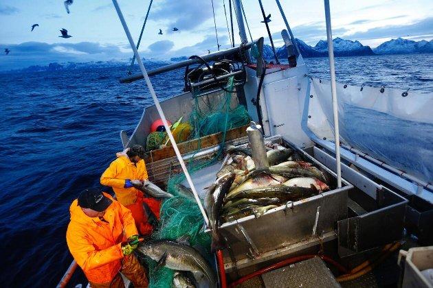 Senterpartiets vil fremme en bedre geografisk utjevning av de tilgjengelige kvotene og dermed verdiskapingen fra vår begrensede fiskeressurser, skriver Geir Adelsten Iversen