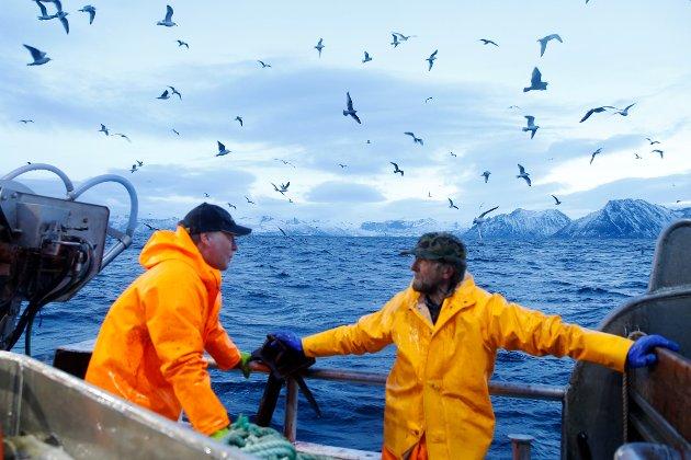 Det som bekymrer oss, og som trolig bekymrer store deler av de aktive fiskerisamfunn langs kysten er at AP nå legger seg på SV sin linje i fiskeripolitikken og at dette kan bli norsk fiskeripolitikk ved et eventuelt regjeringsskifte, skriver kronikkforfatterne.