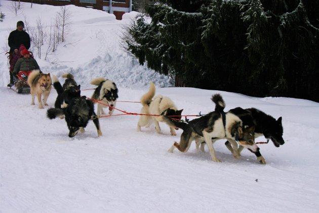 Hundespann: Laila Veggerdal og Kristine Rygge hadde tatt turen helt fra Rælingen sammen med åtte andre for å være med på aktivitetsdagen på Øverby.