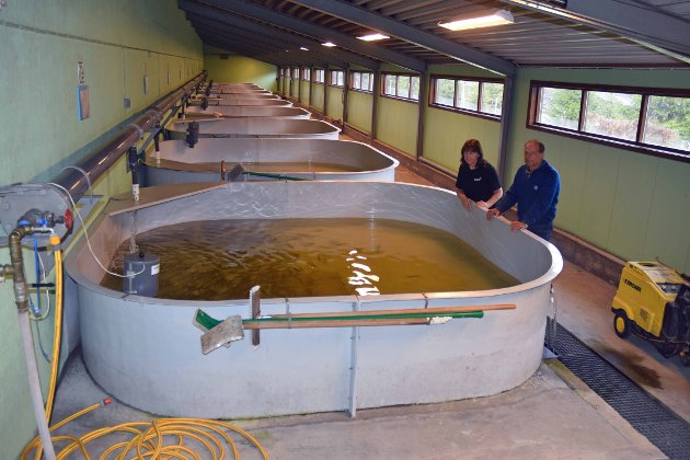 SETTEFISK: - En avdeling i settefiskanlegget i Hunderfossen. Settefisken er og vil være redning for hunderørreten så lenge kraftverket eksisterer, skriver Arnt Orskaug