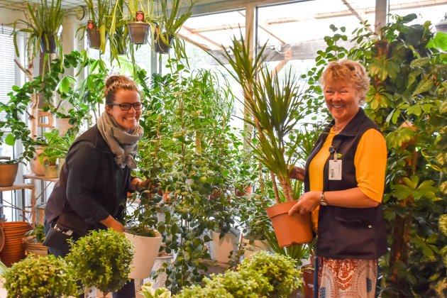 Oppussingen skal gi bedre plass til grønne planter, som er spesialfeltet til hagesenteret.
