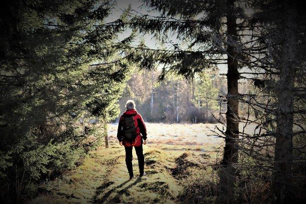 Gunnar Kullerud: Innpå skogene på fredag...