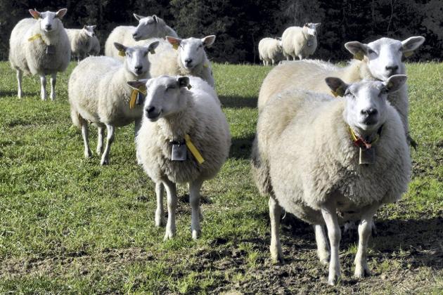 Landbruk: Alle underlagstall vi har fått viser en positiv utvikling og optimisme i jordbruket, mener brevskriveren. Foto: Arne FOrbord