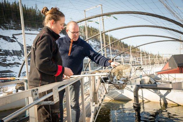 Omtrent 45.000 liter vann slippes ut i minuttet fra smoltproduksjonen hos Kvarøy Smolt. Da blir det naturlig nok mye avfall også fra de hundretusenvis av smolt som står i karene.