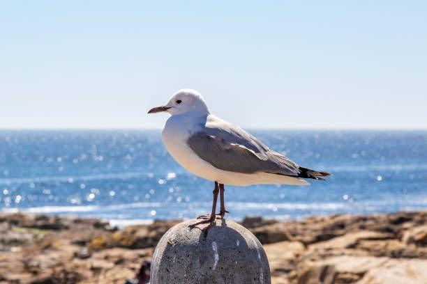 MÅ TÅLE:- Vi måt tåle naturlig dyreliv, og lære oss å leve i fred med naturen, sier Jenny Rolness i Dyenes rett.