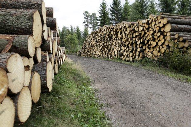 – Burde vi ikke slå ring om det som er igjen av norsk treforedling i stedet for å eksportere tømmeret, spør Einar Høstbjør i dette innlegget. (Foto: Vidar Ruud, NTB Scanpix)