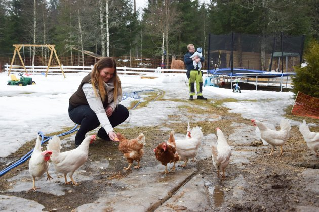 KLUKK KLUKK: Det er koselig å mate hønene, som de har drøyt 40 av. Men de planlegger å redusere antallet til 15.