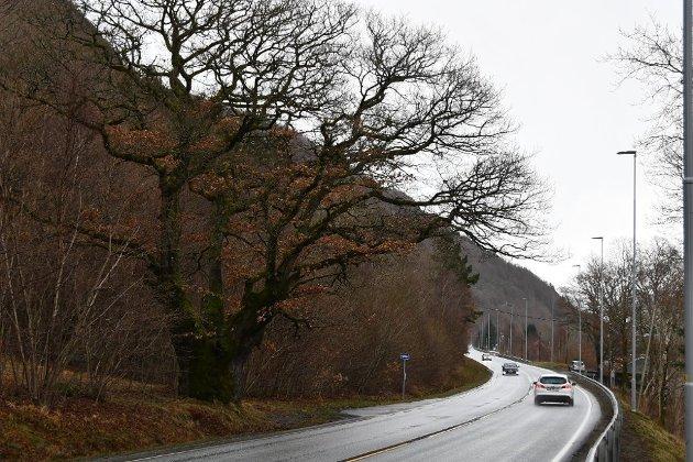 BRA: Dagens leder uttrykker glede for gang og sykkelstien mellom Solbakk og Grønevoll, men håper dette bare er første etappe.