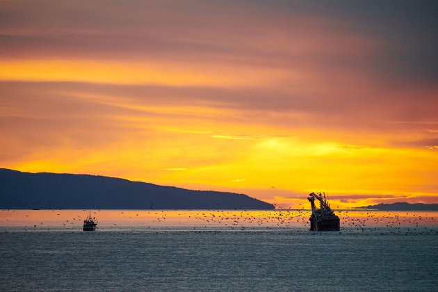 GÅTT MED STRØMMEN: Fiskeredskaper som går tapt som følge av vær og vind, eller andre grunner, er et betydelig problem for dyrelivet i havet.