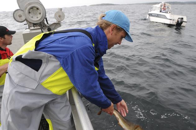 Forskninga som gjennomføres nå, vil ha stor betydning for den framtidige forvaltninga av kysttorsken. Illustrasjonsfoto
