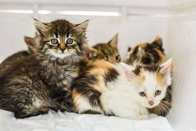 Katter som ble funnet etterlatt i et skogholt i Fredrikstad tidligere denne måneden.