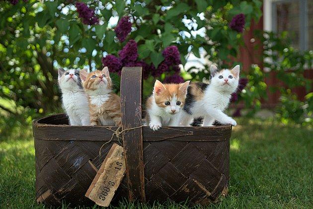MÅ FØLGES OPP: Kattunger er søte, og normalt rimelige å anskaffe. De skal imidlertid følges opp på en like god måte som en valp til 20.000 kroner, mener GDs ansvarlige redaktør, Tom Martin Kj. Hartviksen.Foto: Jari Hytönen