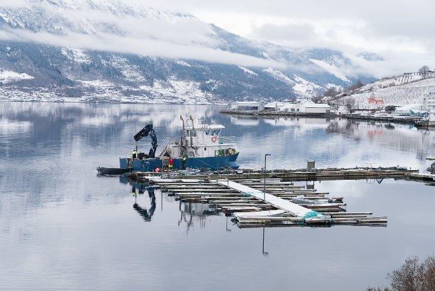 Valen Marina arbeider med tilbakeflytting av småbåthamna på Lofthus. Den siste tida har vind gjort ein del skade på hamna, fortel leiaren av Lofthus båtlag. Han håpar forsikringsselskapet vil ta kostnaden. - Elles må heradet gjera det, seier han.