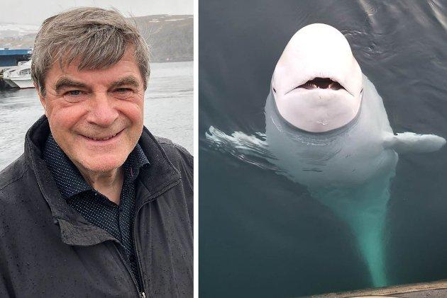 MØTES: Hammerfest-ordfører Alf E. Jakobsen har sagt ja til å ta ansvar for Beluga-hvalen som hammerfestingene har døpt Hvaldimir.