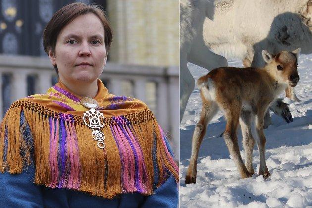 Reineier og politiker Nancy Anti reagerer voldsomt på at reineiere ikke får lov til å gjøre noe når ørnen forsyner seg av kalvene deres.