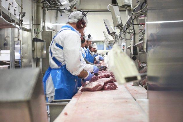 Onsdag denne uka kom beskjeden om at ledelsen i Nortura innstiller på å avvikle skjærelinja i Steinkjer og sentralisere all skjæring av svin til Tønsberg.
