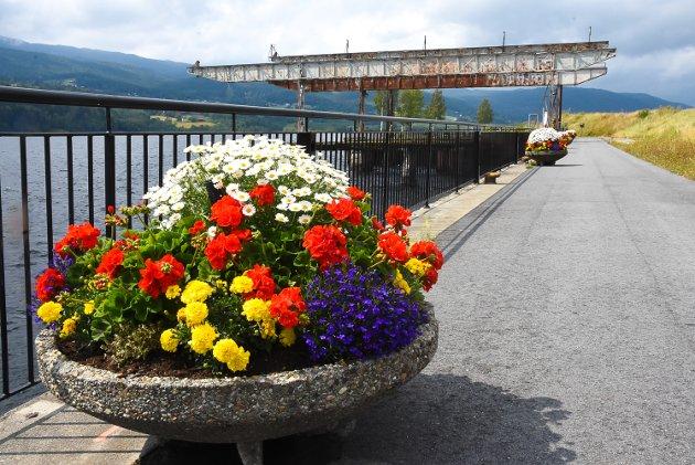 Notodden kommune har vært romslig med blomsterbudsjettet denne sommeren, til glede for innbyggerne.