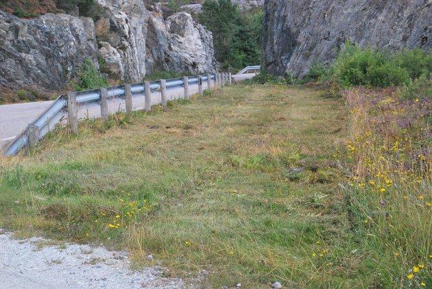 Tore Svendsen fortviler over fylkeskommunen sin håndtering av plantevekst langs fylkesveiene. Her har han tatt bilde etter at kantklipping har blitt uført på fylkesvei 568 mot Sævrøy.