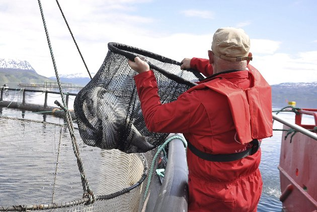 Klatre i verdikjeden: Nord-Norge må takke nei til å være råstoffleverandør. Og da snakker vi ikke bare om fisk, det kan være energi, mineraler, satellittdata, kunnskap om nordområdene, reiseliv og turistfiske. I dag tilfaller verdiskapningen fra høyt verdsatte produkter i for liten grad landsdelen. Avkastningen er høyest i foredlingsleddene og de må etableres lokalt.  Illustrasjonsfoto