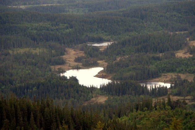 Bjørktjønna og Svartvatnet i Bymarka