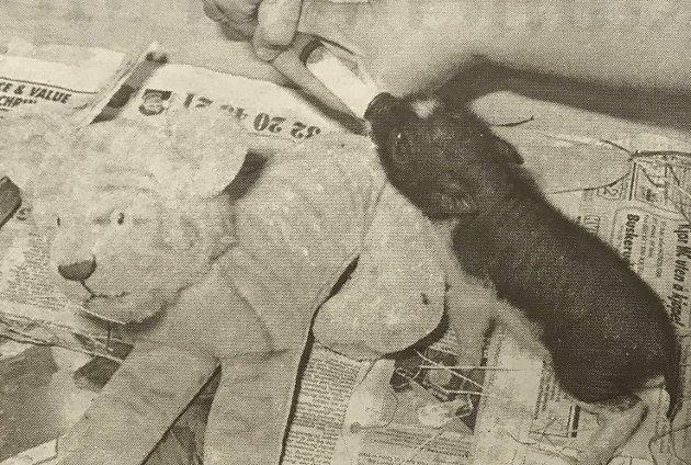 """Hos Marianne og Stein Langørgen i Bingen bodde det en minigris med navn Jessica i 1997. Den ble matet 5-6 ganger hver dag med engangssprøyte, alltid med selskap av """"lekekameraten"""" tøy-Tigeren. Den var også så heldig å få ha en hel stue for seg selv."""