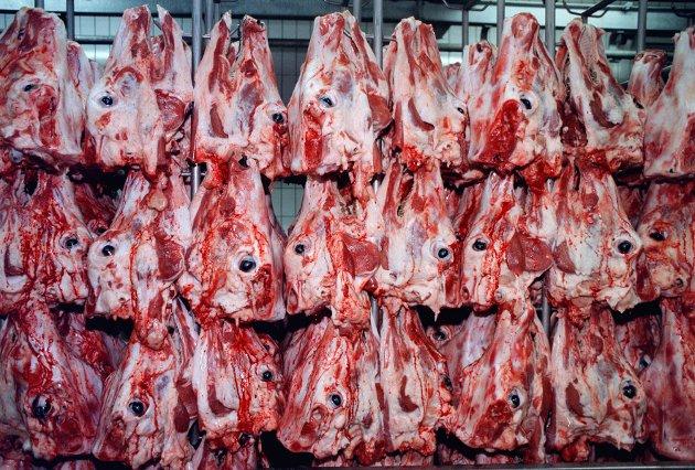 HAs desksjef er kritisk til norsk kjøttproduksjon og spiser ikke kjøtt.