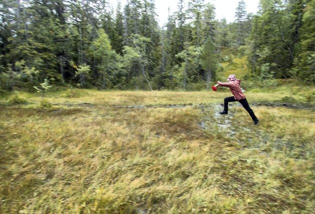– Frp vil regne inn verdien av norske skoger og karbonet de binder, og dermed redusere de nødvendige utslippskuttene i andre sektorer. Det er en kontroversiell praksis, skriver Josefine Gjerde. FOTO: Gorm Kallestad, NTB