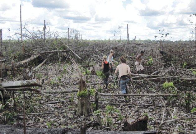 Dokumentasjon: Denne gigantiske hogstflata er i Tamshiyacu, ikke langt fra Iquitos. Her er noen av elevene på vei inn i feltet for å dokumentere. Foto: Øivind Hammer