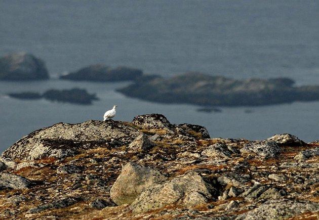 Det er ikke det viktigste å felle mye fugl, det viktigste er å komme ut å nyte naturen som vi er så heldige å ha her i Finnmark, skriver artikkelforfatteren.