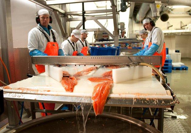 Lerøy har finansielle evner og vilje til å utvikle virksomhetene innen vår verdikjede for hvitfisk, men konsernet er selvsagt avhengig av forutsigbarhet i rammevilkår - og derfor at flertallet i det politiske lederskapet er ansvarlige og har respekt for at industriutvikling krever langsiktig tenkning, skriver styreleder i  Lerøy Aurora og myndighetskontakt i Lerøy Seafood Group, Stig Nilsen. Bildet er fra  fiskeslakeriet til Lerøy Fossen på Osterøy.