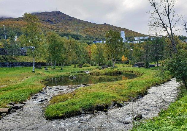 Taraldsvikelva er unik bynatur. Lett tilgjengelig et steinkast fra Torvet.