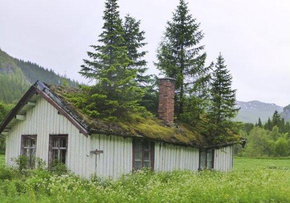 Framtiden kommer av seg selv, men ikke utvikling! Slik kan framtiden arte seg hvis vi lar naturen ta styringen på boligutviklingen. Foto: Rolf Novsett