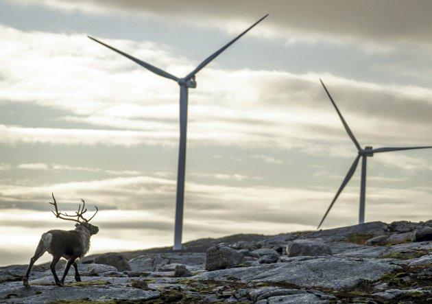 – Samene har vunne. Eg håpar sentrumsregjeringa viser seg lovlydige og anerkjenner at Høgsterett har siste ordet, skriv spaltisten om Storheia vindpark i Trøndelag. FOTO:  Heiko Junge / NTB